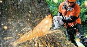 Tree Removal Coombabah