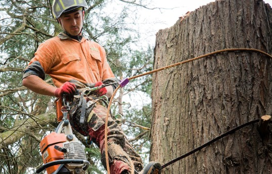 Tree Service Coombabah