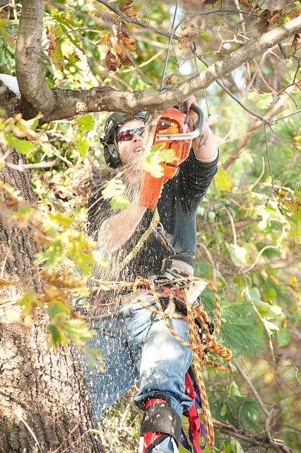 Tree Pruning Coombabah