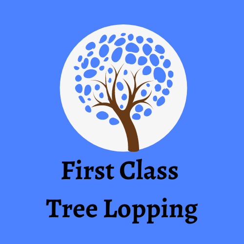 Tree Lopping Coombabah