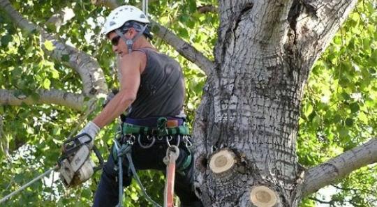 Gold Coast Tree Removal Service